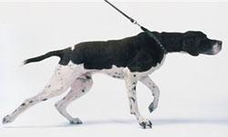 leash pull