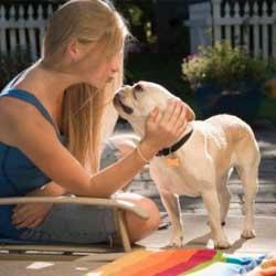 stand dog training