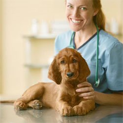 dog ear check