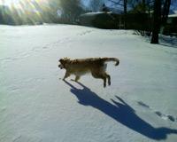 winter dog fun