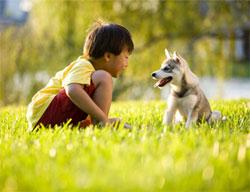 boy and husky