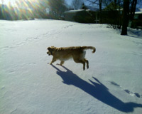 winter dog fun